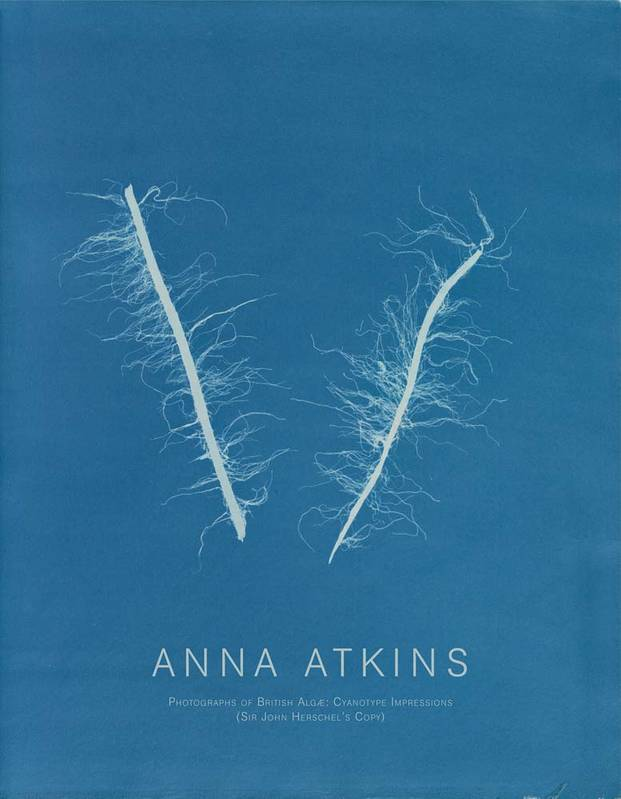Anna Atkins Photographs of British Alg  Cyanotype Impressions /anglais