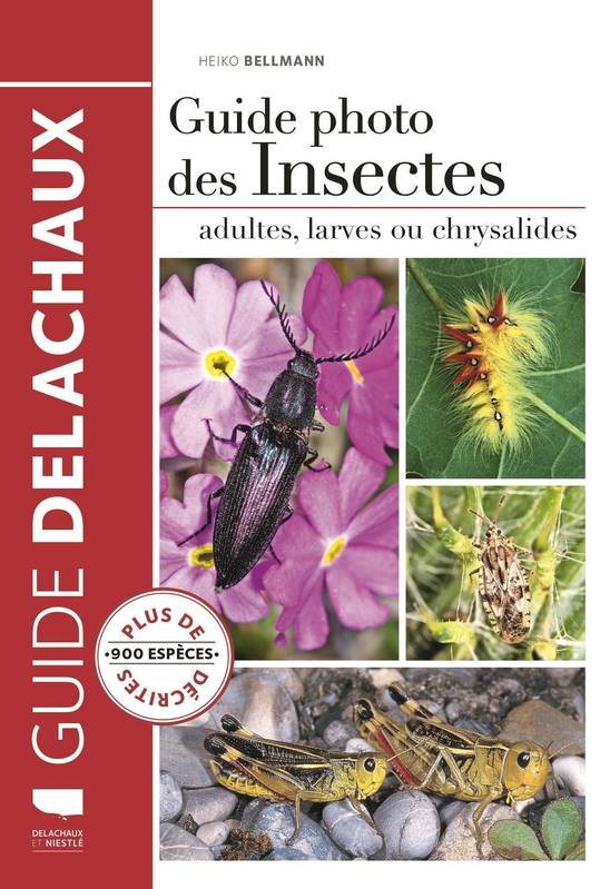 Guide photo des insectes, [adultes, larves ou chrysalides]