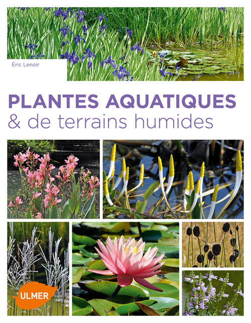 livre plantes aquatiques de terrains humides lenoir eric ulmer medium 9782841388264. Black Bedroom Furniture Sets. Home Design Ideas