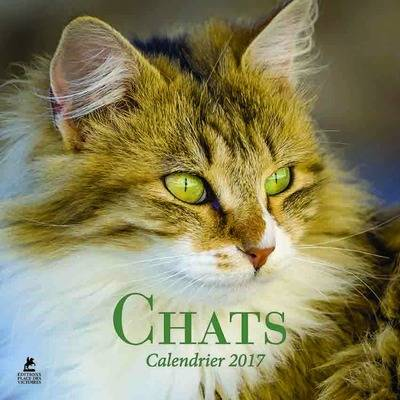 Chats calendrier 2017