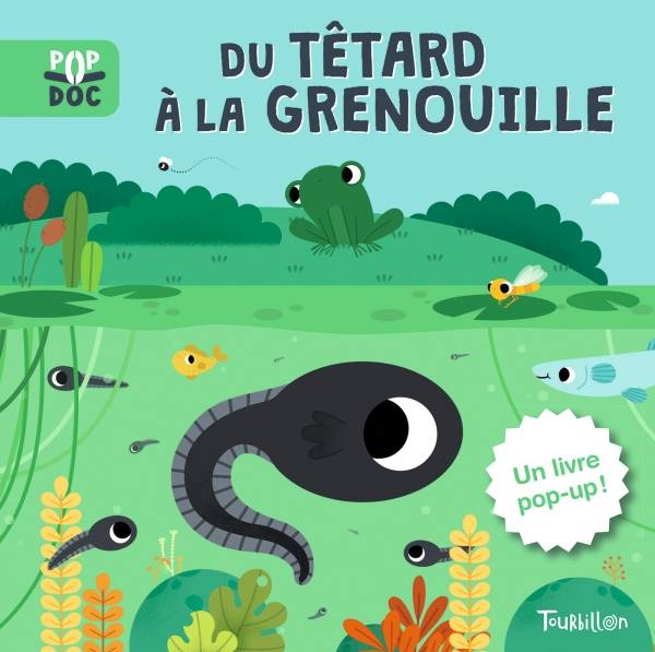 Du têtard à la grenouille - Pop up