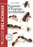 Fourmis d'Europe occidentale