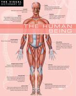 The Visual Dictionary of The Human Being, The Human Being