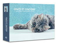 L'agenda-calendrier Chats et Chatons 2020