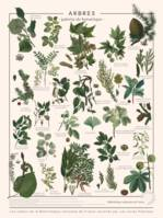 Arbres communs, l'affiche d'illustrations nature