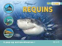 Requins : 5 pop-up extraordinaires