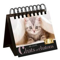 Chats et chatons / 365 jours
