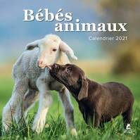 BEBES ANIMAUX - CALENDRIER 2021