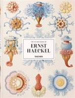 XL-Haeckel